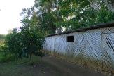 bamboo penn