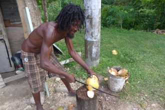 cutting open a young coconut