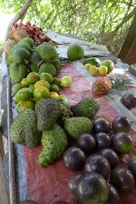star apple, soursop, ugli and coconuts